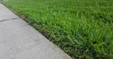 weed eater trimmed lawn