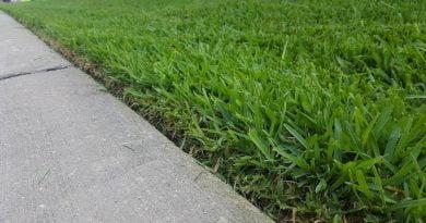 Dewalt-cordless-weed-eater